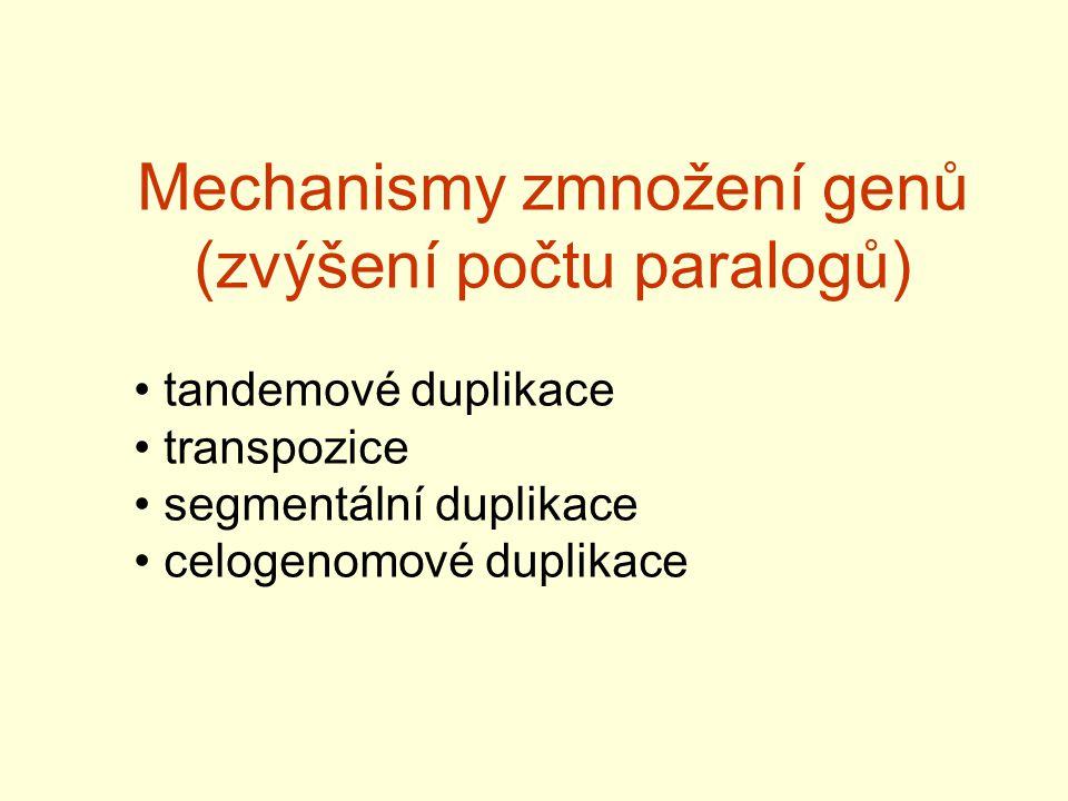 Mechanismy zmnožení genů (zvýšení počtu paralogů) tandemové duplikace transpozice segmentální duplikace celogenomové duplikace