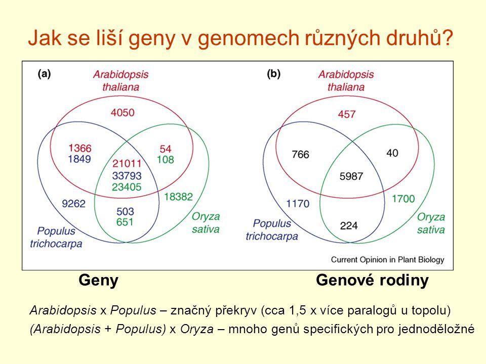Jak se liší geny v genomech různých druhů? GenyGenové rodiny Arabidopsis x Populus – značný překryv (cca 1,5 x více paralogů u topolu) (Arabidopsis +