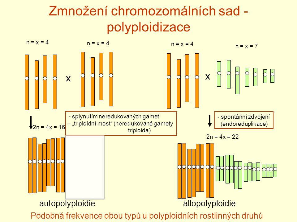 """Zmnožení chromozomálních sad - polyploidizace x x - splynutím neredukovaných gamet - """"triploidní most (neredukované gamety triploida) autopolyploidieallopolyploidie n = x = 4 n = x = 7 2n = 4x = 16 2n = 4x = 22 Podobná frekvence obou typů u polyploidních rostlinných druhů - spontánní zdvojení (endoreduplikace)"""