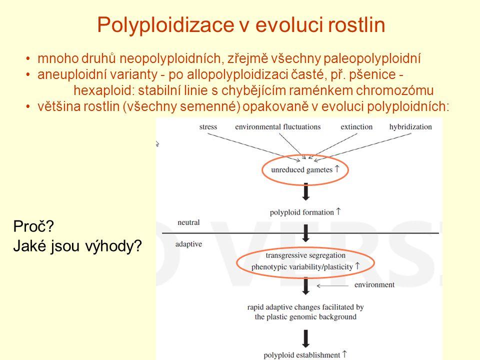 Polyploidizace v evoluci rostlin mnoho druhů neopolyploidních, zřejmě všechny paleopolyploidní aneuploidní varianty - po allopolyploidizaci časté, př.