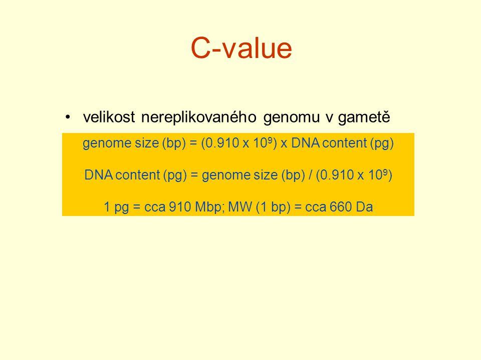 C-value velikost nereplikovaného genomu v gametě genome size (bp) = (0.910 x 10 9 ) x DNA content (pg) DNA content (pg) = genome size (bp) / (0.910 x 10 9 ) 1 pg = cca 910 Mbp; MW (1 bp) = cca 660 Da