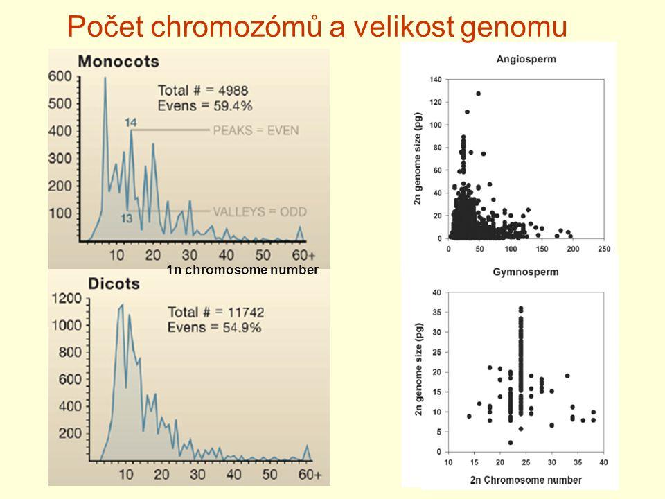 Počet chromozómů a velikost genomu 1n chromosome number