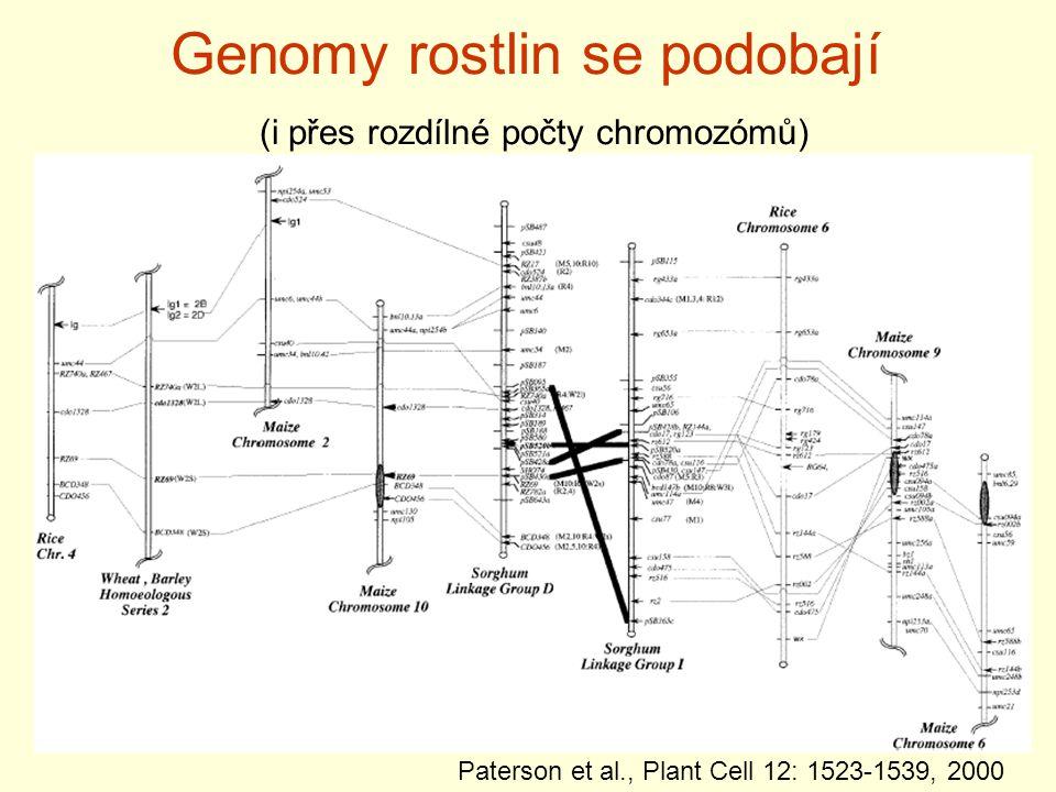 Genomy rostlin se podobají (i přes rozdílné počty chromozómů) Paterson et al., Plant Cell 12: 1523-1539, 2000
