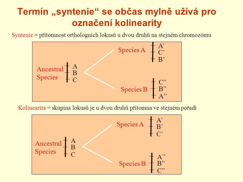 """Termín """"syntenie se občas mylně užívá pro označení kolinearity Syntenie = přítomnost orthologních lokusů u dvou druhů na stejném chromozómu A' B' Species A Species B Ancestral Species C' A B C A B C Kolinearita = skupina lokusů je u dvou druhů přítomna ve stejném pořadí A' C' Species A Species B Ancestral Species B' C B A A B C"""