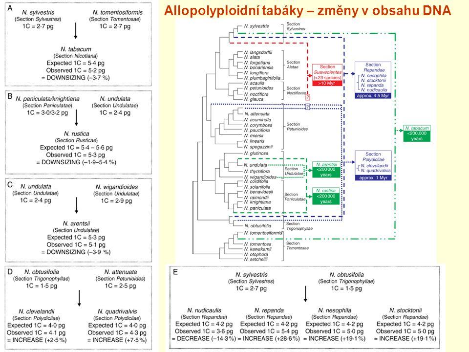Allopolyploidní tabáky – změny v obsahu DNA