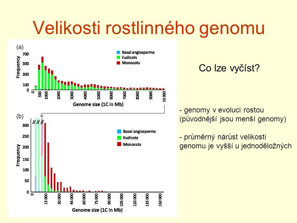 Velikosti rostlinného genomu Co lze vyčíst? - genomy v evoluci rostou (původnější jsou menší genomy) - průměrný nárůst velikosti genomu je vyšší u jed
