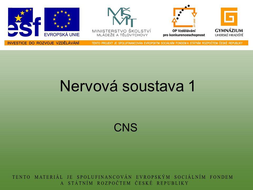 Nervová soustava 1 CNS