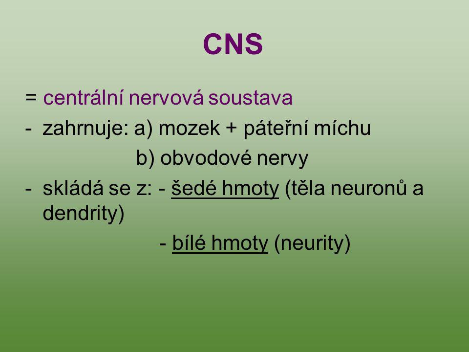 = centrální nervová soustava -zahrnuje: a) mozek + páteřní míchu b) obvodové nervy -skládá se z: - šedé hmoty (těla neuronů a dendrity) - bílé hmoty (