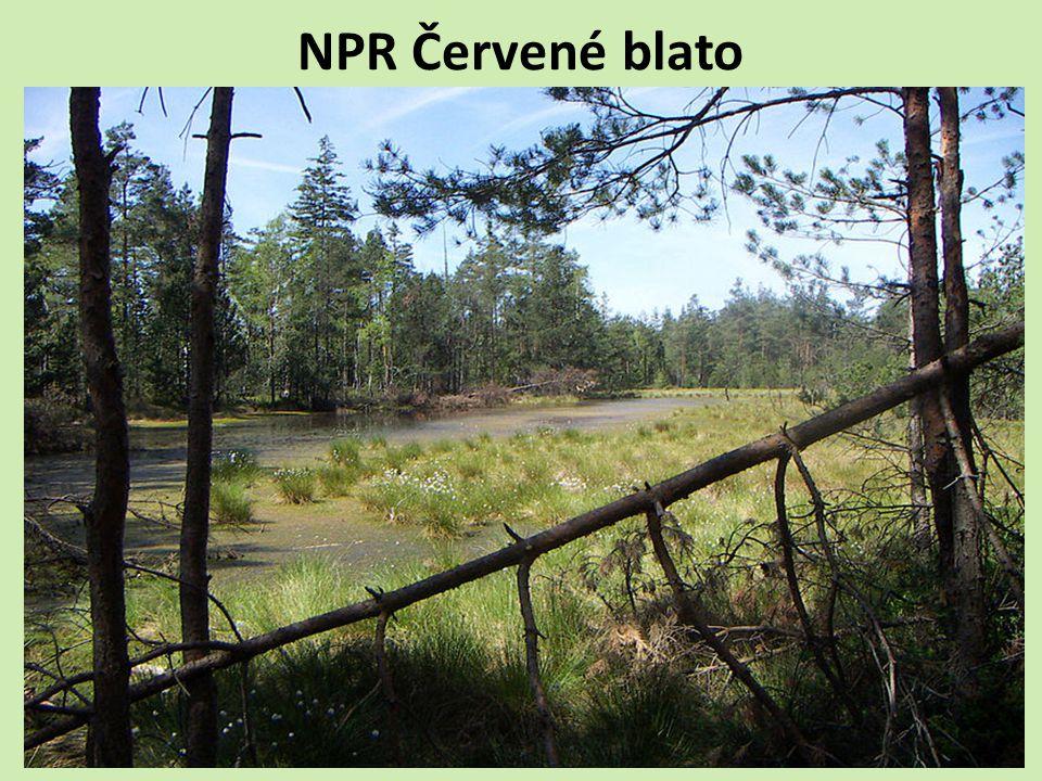 NPR Červené blato