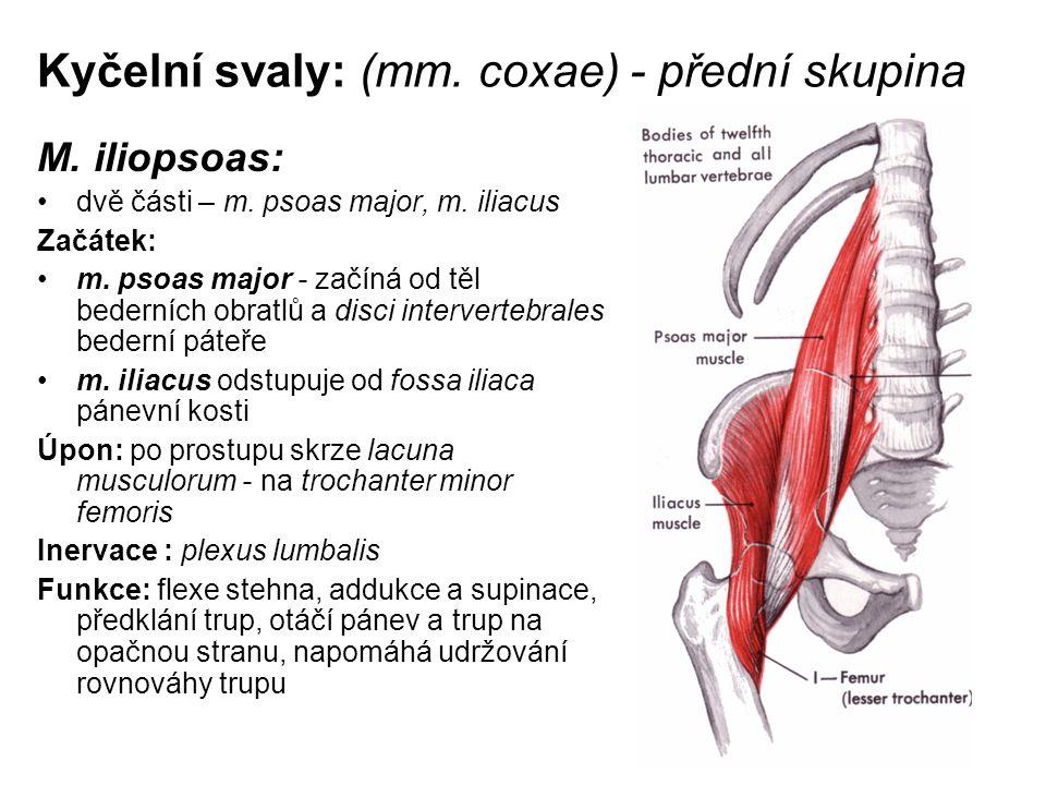 Kyčelní svaly: (mm. coxae) - přední skupina M. iliopsoas: dvě části – m. psoas major, m. iliacus Začátek: m. psoas major - začíná od těl bederních obr