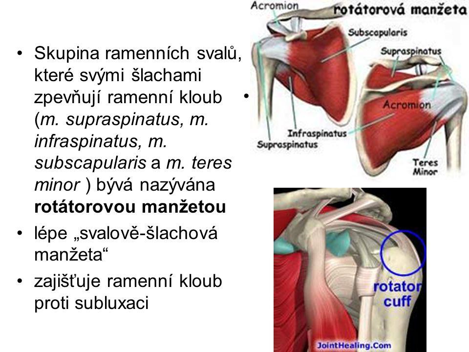 Skupina ramenních svalů, které svými šlachami zpevňují ramenní kloub (m. supraspinatus, m. infraspinatus, m. subscapularis a m. teres minor ) bývá naz