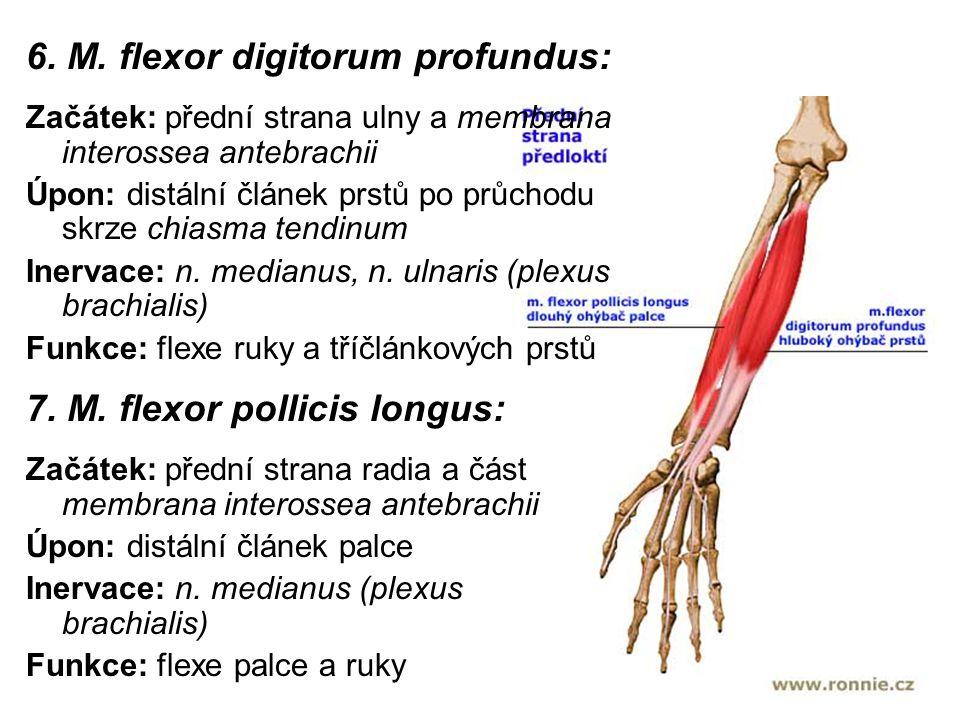 6. M. flexor digitorum profundus: Začátek: přední strana ulny a membrana interossea antebrachii Úpon: distální článek prstů po průchodu skrze chiasma