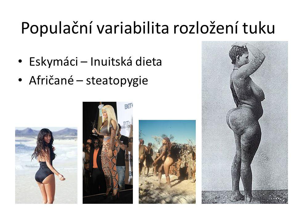 Populační variabilita rozložení tuku Eskymáci – Inuitská dieta Afričané – steatopygie