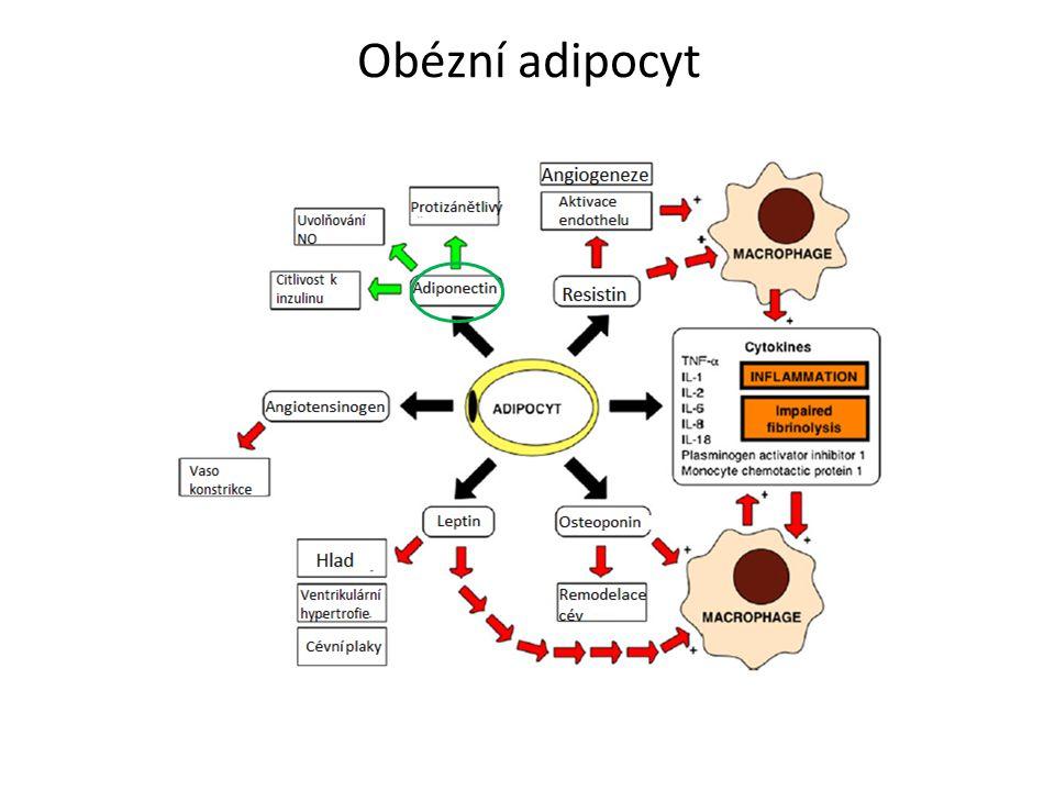 Obézní adipocyt