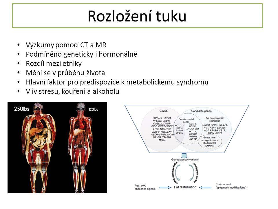 Rozložení tuku Výzkumy pomocí CT a MR Podmíněno geneticky i hormonálně Rozdíl mezi etniky Mění se v průběhu života Hlavní faktor pro predispozice k metabolickému syndromu Vliv stresu, kouření a alkoholu