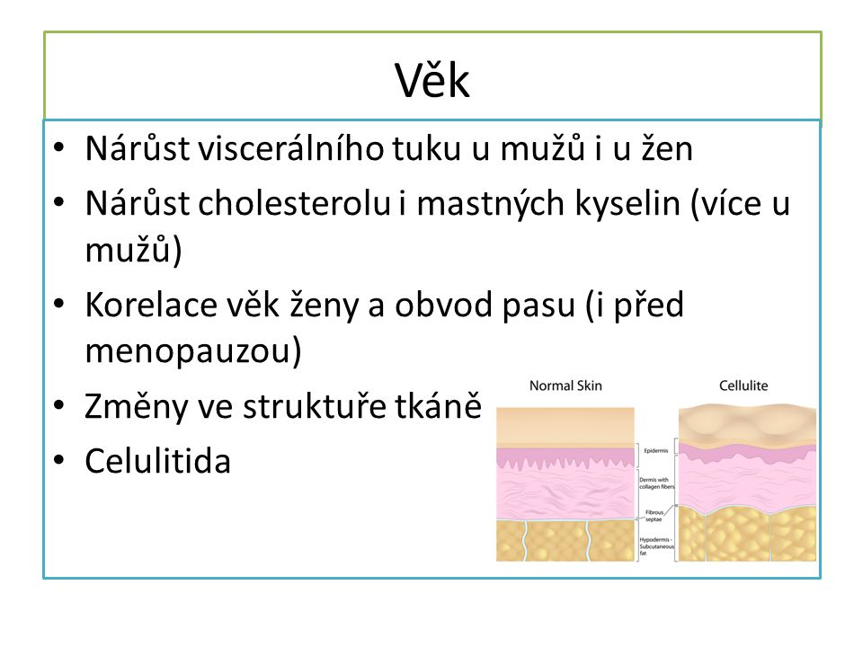 Věk Nárůst viscerálního tuku u mužů i u žen Nárůst cholesterolu i mastných kyselin (více u mužů) Korelace věk ženy a obvod pasu (i před menopauzou) Změny ve struktuře tkáně Celulitida