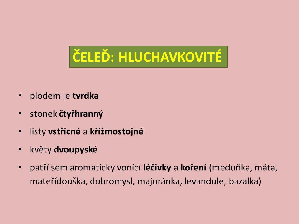 ČELEĎ: HLUCHAVKOVITÉ plodem je tvrdka stonek čtyřhranný listy vstřícné a křížmostojné květy dvoupyské patří sem aromaticky vonící léčivky a koření (me