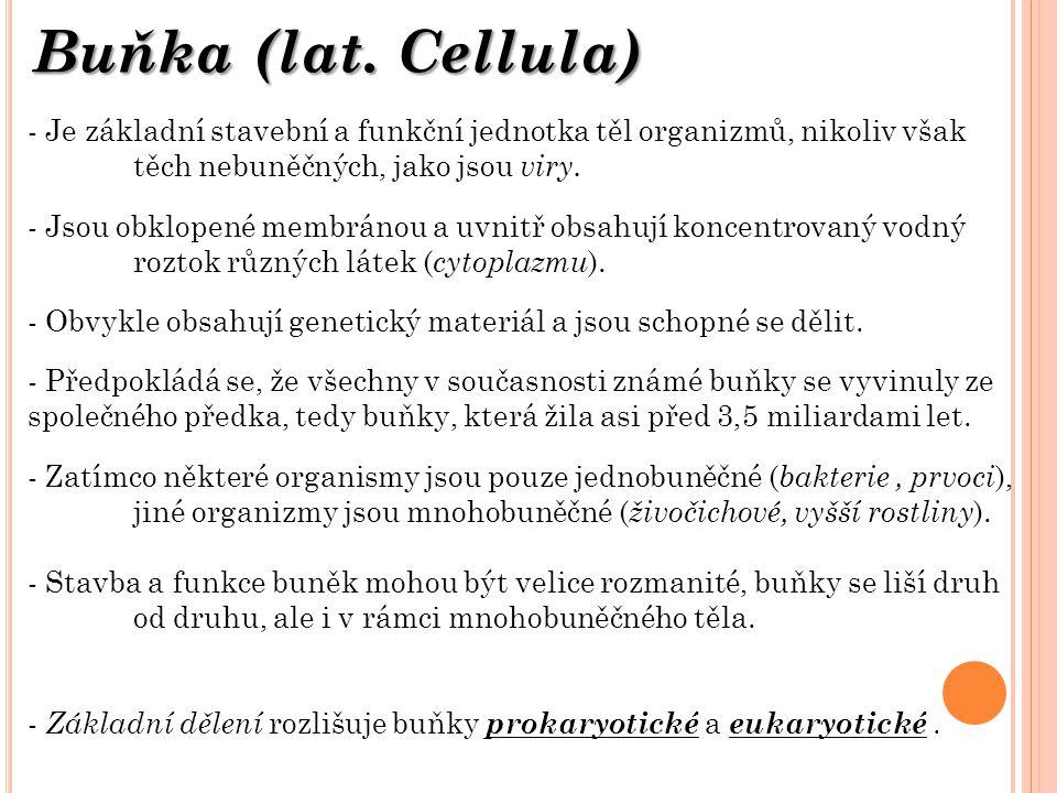 Buňka (lat.