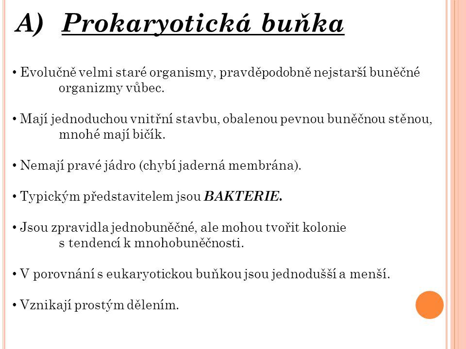 A)Prokaryotická buňka Evolučně velmi staré organismy, pravděpodobně nejstarší buněčné organizmy vůbec.