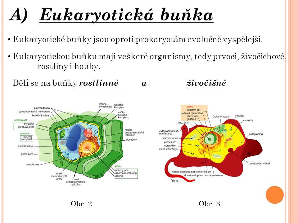 A)Eukaryotická buňka Eukaryotické buňky jsou oproti prokaryotám evolučně vyspělejší.