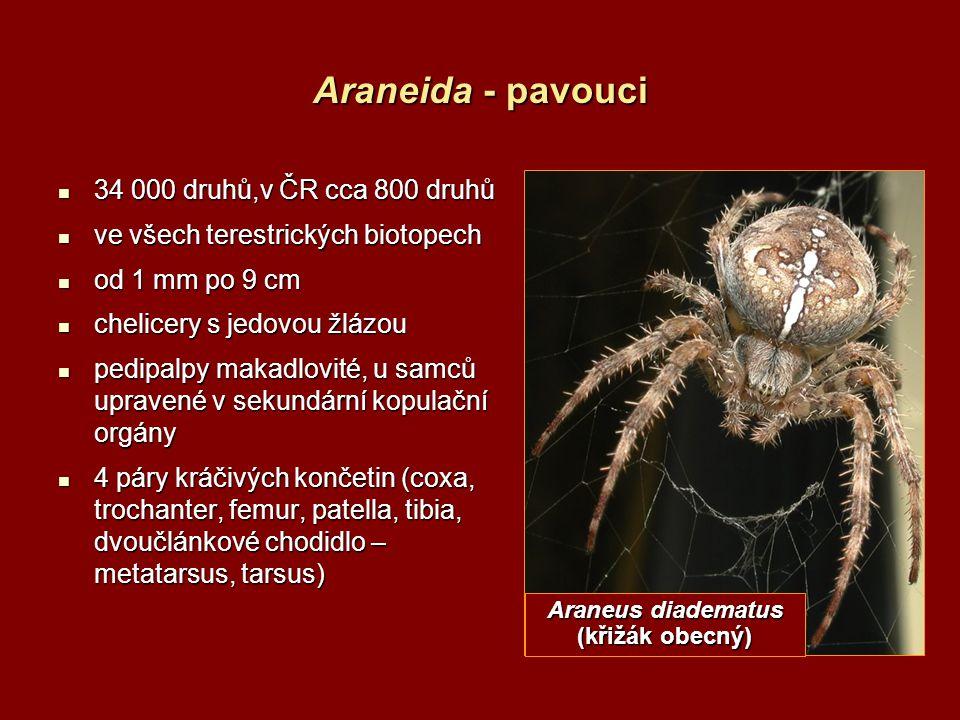 Araneida - pavouci 34 000 druhů,v ČR cca 800 druhů 34 000 druhů,v ČR cca 800 druhů ve všech terestrických biotopech ve všech terestrických biotopech o