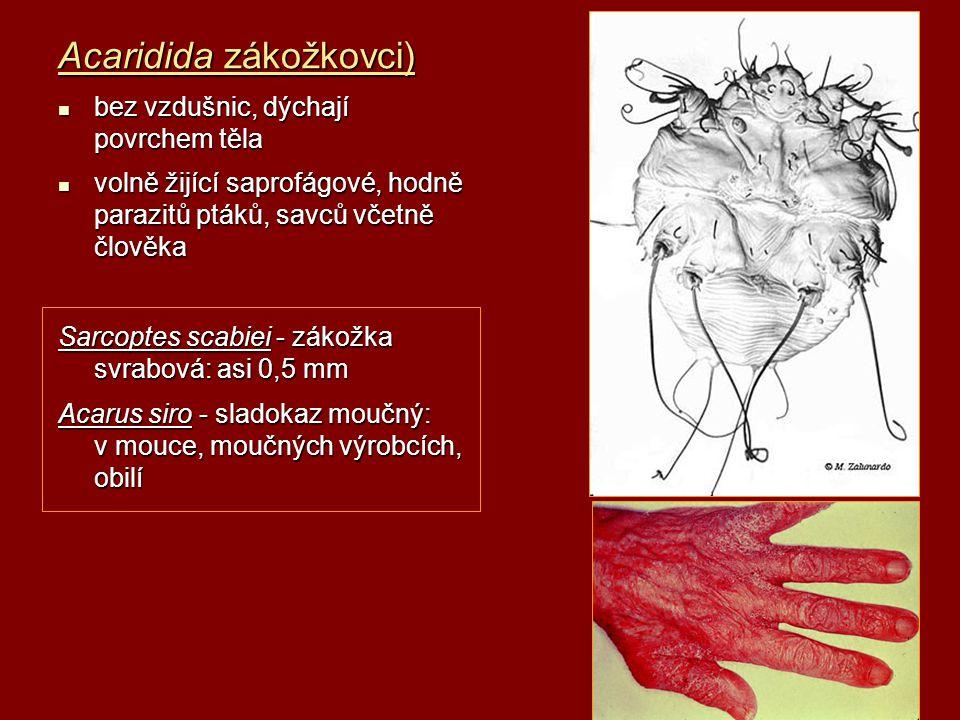 Acaridida zákožkovci) bez vzdušnic, dýchají povrchem těla bez vzdušnic, dýchají povrchem těla volně žijící saprofágové, hodně parazitů ptáků, savců vč