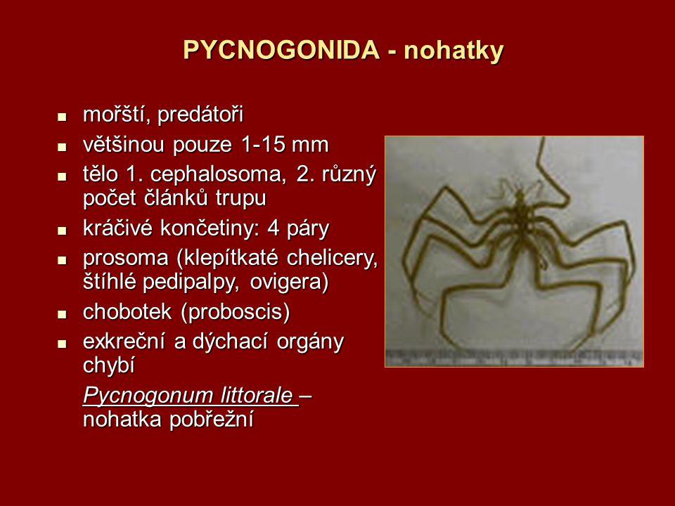 PYCNOGONIDA - nohatky mořští, predátoři mořští, predátoři většinou pouze 1-15 mm většinou pouze 1-15 mm tělo 1. cephalosoma, 2. různý počet článků tru