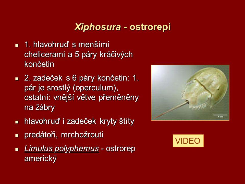 Arachnida - pavoukovci primárně terestričtí primárně terestričtí původně 4 páry kráčivých končetin původně 4 páry kráčivých končetin trávení vždy extraintestinální trávení vždy extraintestinální coxální žlázy a entodermální malpighické trubice coxální žlázy a entodermální malpighické trubice NS výrazně koncentrována NS výrazně koncentrována složené oči druhotně rozpadlé na oči jednoduché složené oči druhotně rozpadlé na oči jednoduché lamelovité plicní vaky a/nebo vzdušnice.