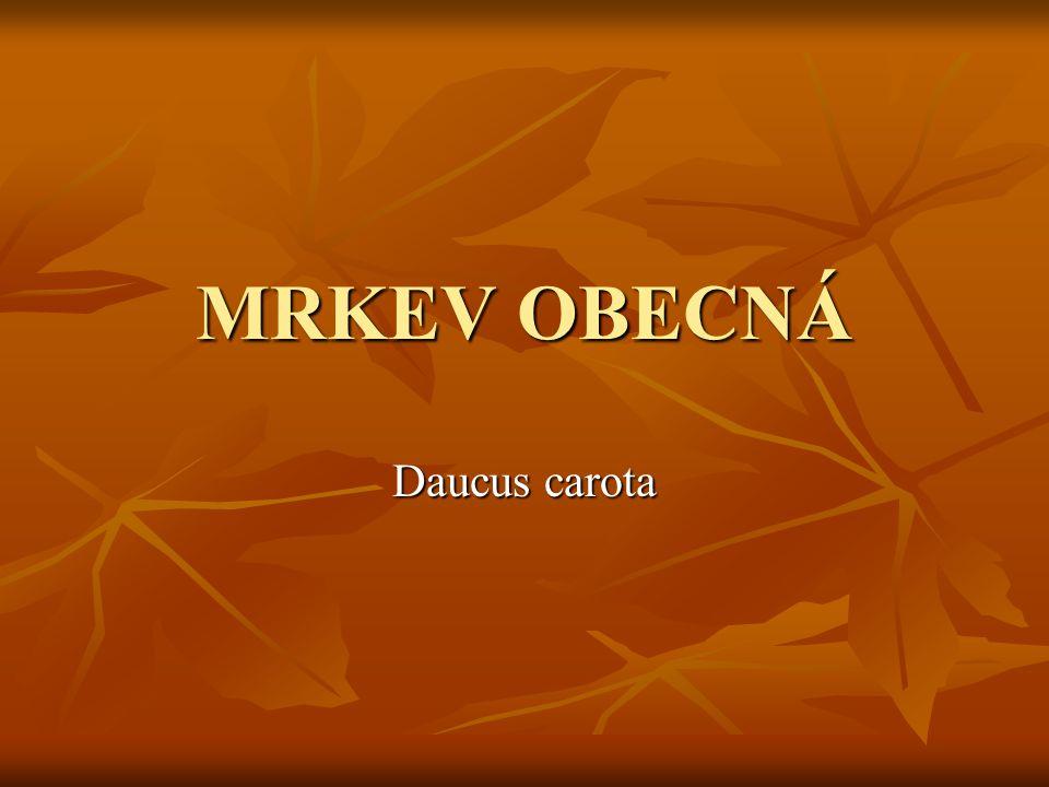 MRKEV OBECNÁ Daucus carota