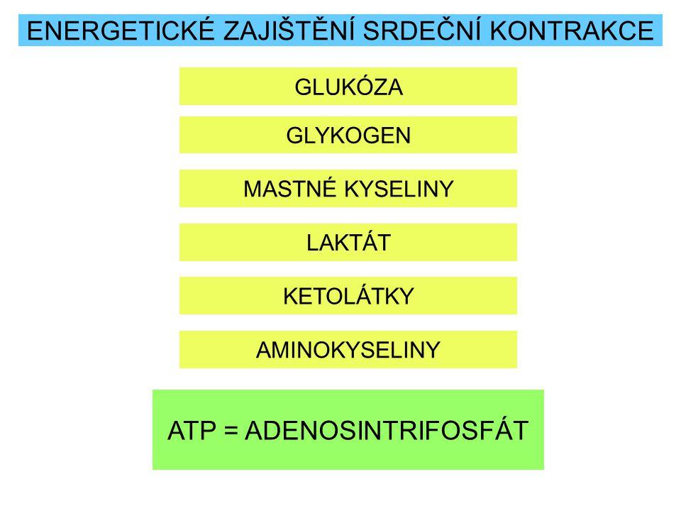 ENERGETICKÉ ZAJIŠTĚNÍ SRDEČNÍ KONTRAKCE GLUKÓZA GLYKOGEN MASTNÉ KYSELINY LAKTÁT KETOLÁTKY AMINOKYSELINY ATP = ADENOSINTRIFOSFÁT