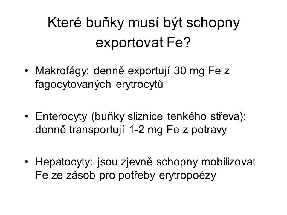 Které buňky musí být schopny exportovat Fe.
