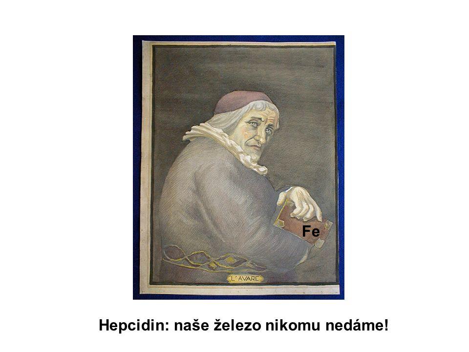 Fe Hepcidin: naše železo nikomu nedáme!