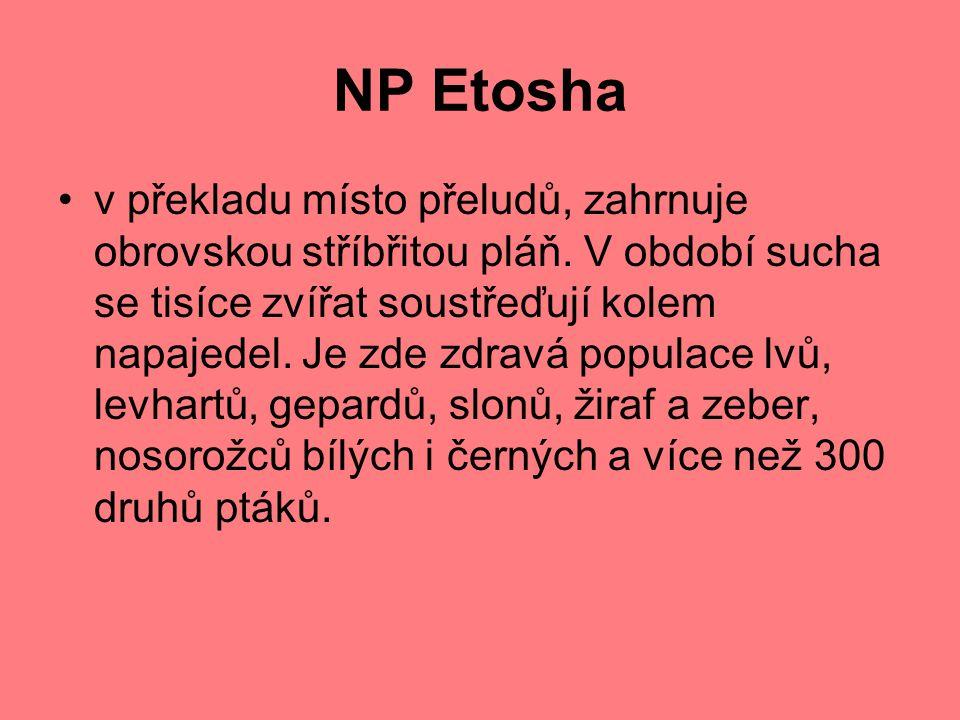 NP Etosha v překladu místo přeludů, zahrnuje obrovskou stříbřitou pláň.
