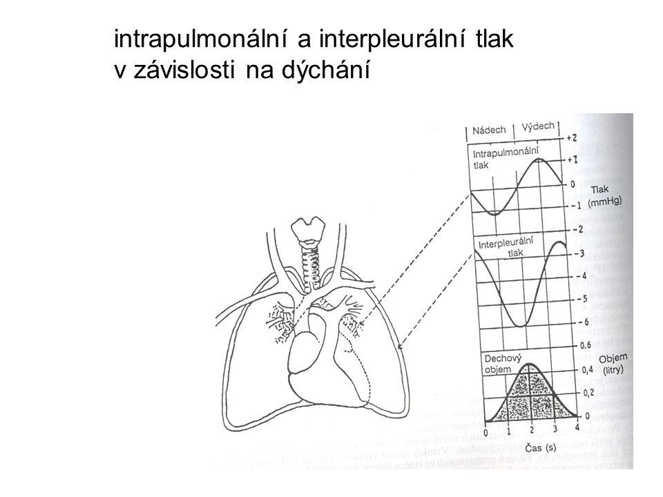 poruchy ventilace 2 porucha průchodnosti horních dýchacích cest porucha průchodnosti dolních dýchacích cest