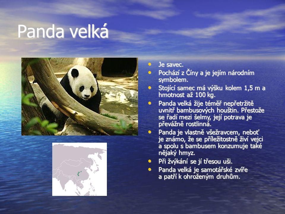 Panda velká Je savec.Je savec. Pochází z Číny a je jejím národním symbolem.