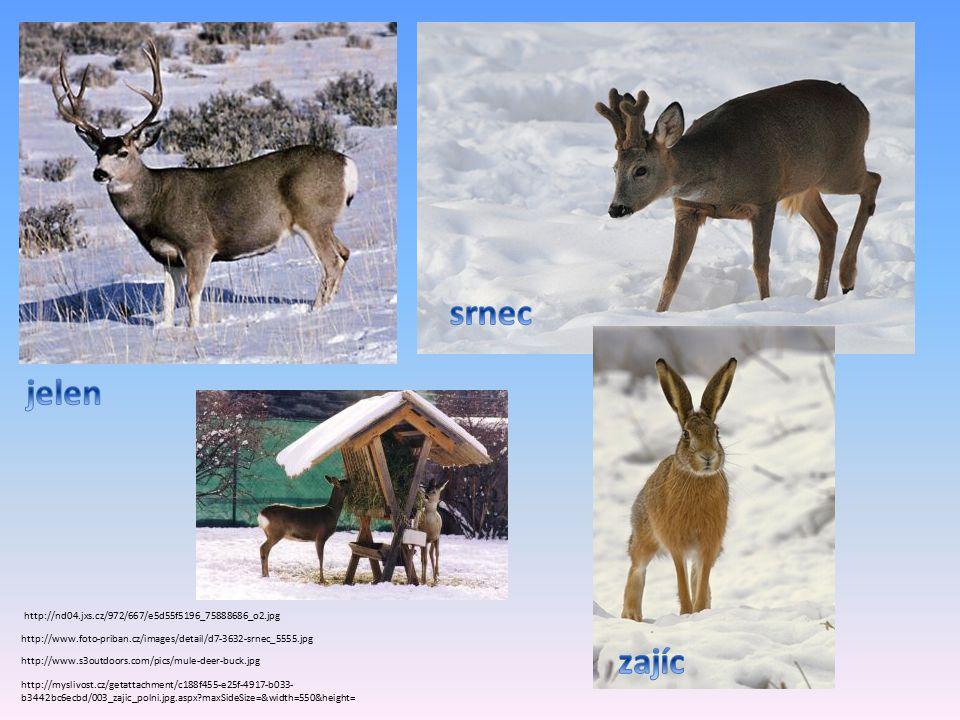 http://www.foto-priban.cz/images/detail/d7-3632-srnec_5555.jpg http://www.s3outdoors.com/pics/mule-deer-buck.jpg http://myslivost.cz/getattachment/c188f455-e25f-4917-b033- b3442bc6ecbd/003_zajic_polni.jpg.aspx maxSideSize=&width=550&height= http://nd04.jxs.cz/972/667/e5d55f5196_75888686_o2.jpg
