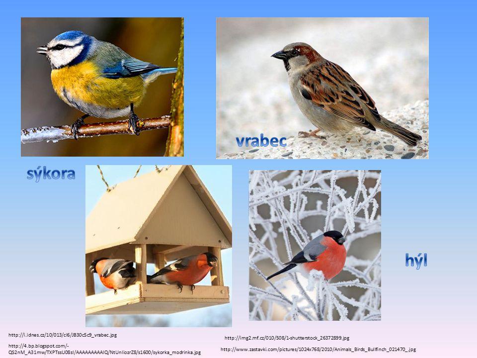 http://4.bp.blogspot.com/- QS2nM_A31mw/TXPTssU08sI/AAAAAAAAAIQ/NtUnIiozrZ8/s1600/sykorka_modrinka.jpg http://i.idnes.cz/10/013/cl6/JB30c5c9_vrabec.jpg http://www.zastavki.com/pictures/1024x768/2010/Animals_Birds_Bullfinch_021470_.jpg http://img2.mf.cz/010/508/1-shutterstock_26372899.jpg