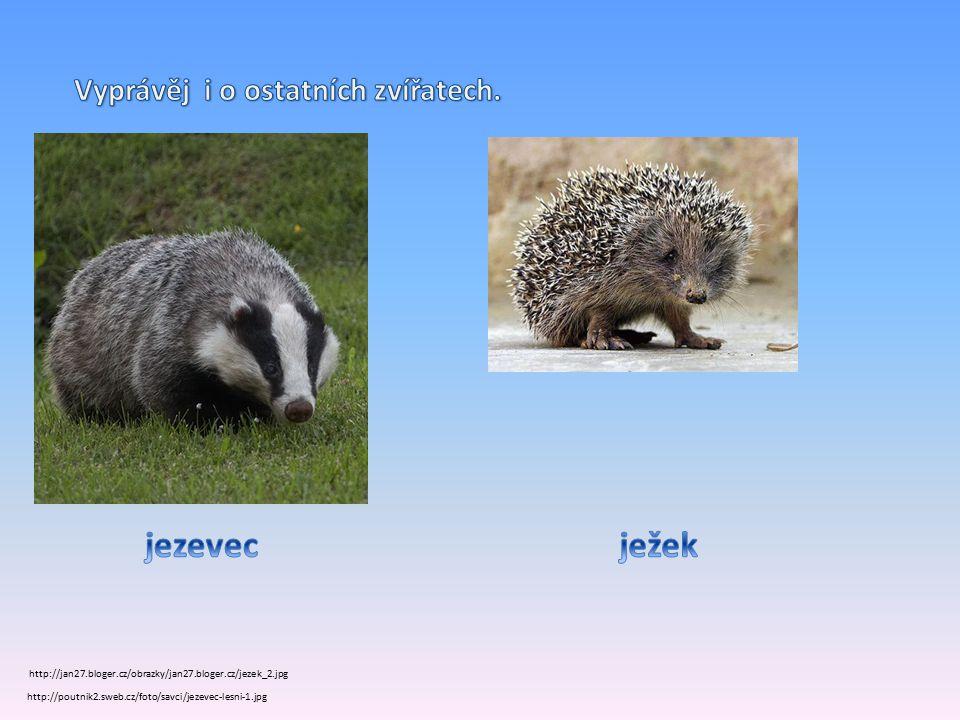 http://poutnik2.sweb.cz/foto/savci/jezevec-lesni-1.jpg http://jan27.bloger.cz/obrazky/jan27.bloger.cz/jezek_2.jpg