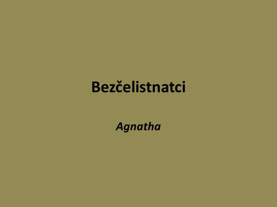 Nadtřída: Agnatha (bezčelistnatci) Chybí čelisti U současných druhů neexistují párové ploutve U fosilních druhů kostěná lebka, u recentních je celá kostra chrupavčitá.