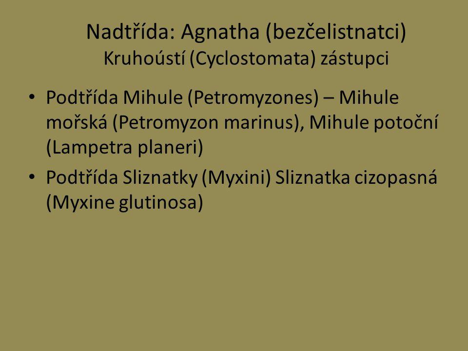 Nadtřída: Agnatha (bezčelistnatci) Kruhoústí (Cyclostomata) zástupci Podtřída Mihule (Petromyzones) – Mihule mořská (Petromyzon marinus), Mihule potoč