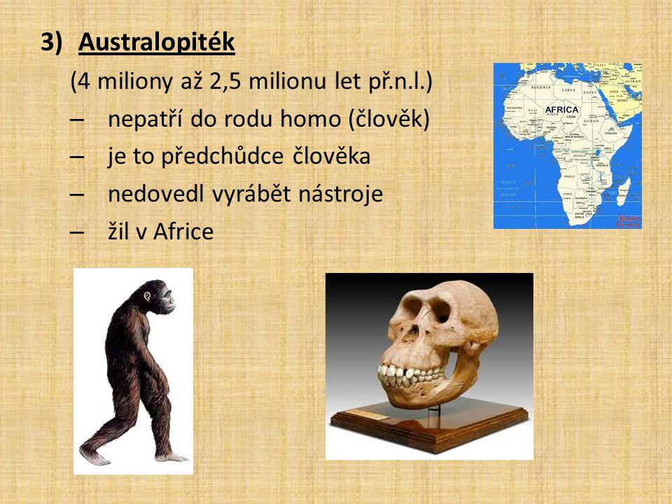 3)Australopiték (4 miliony až 2,5 milionu let př.n.l.) – nepatří do rodu homo (člověk) – je to předchůdce člověka – nedovedl vyrábět nástroje – žil v