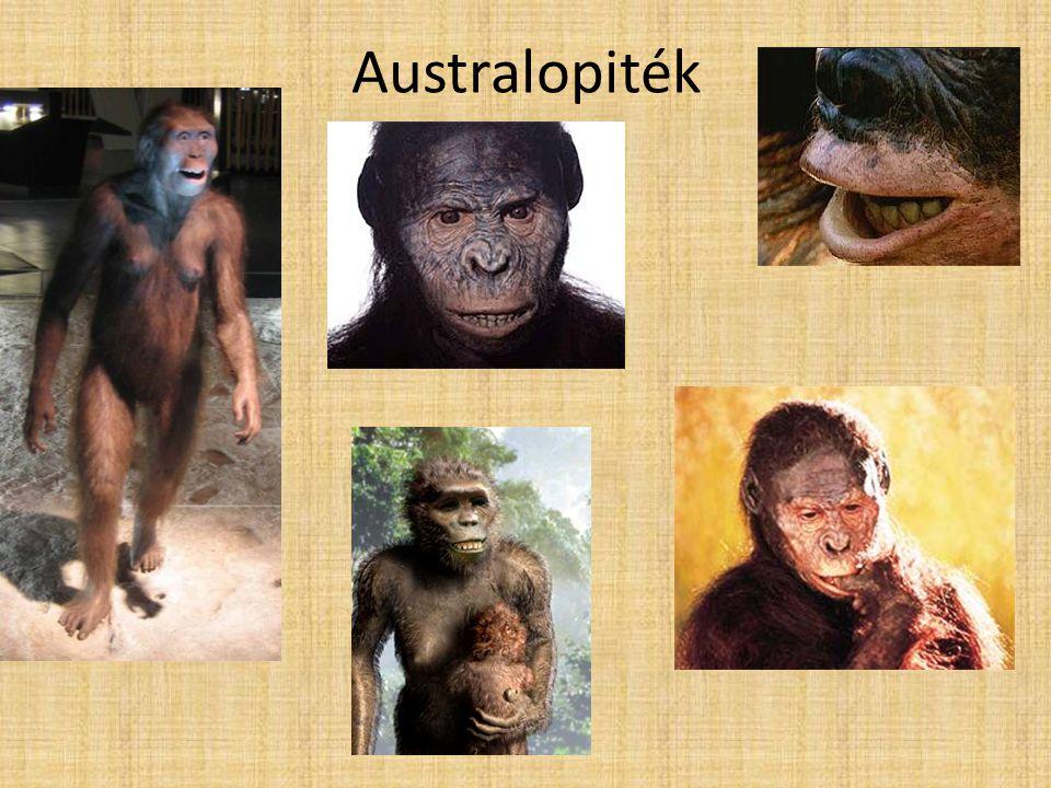 Australopiték