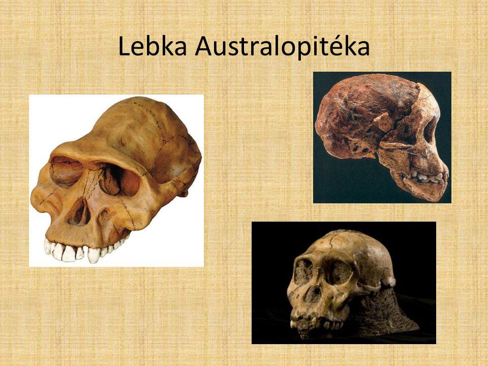 4)Člověk zručný (homo habilis) (2,5 – 1,5 mil.