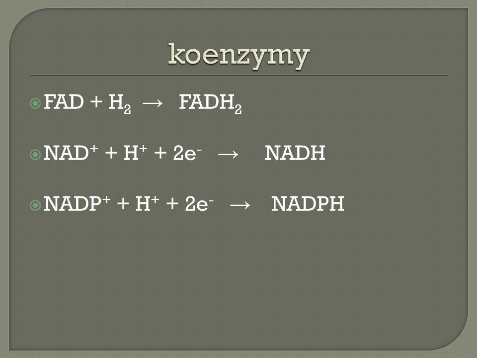  FAD + H 2 → FADH 2  NAD + + H + + 2e - → NADH  NADP + + H + + 2e - → NADPH