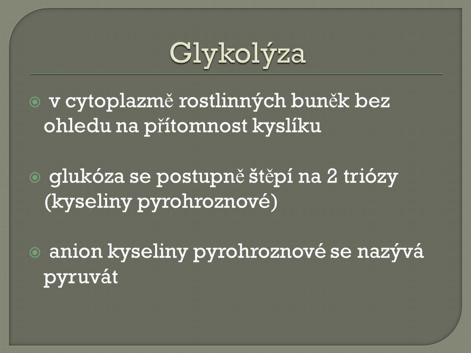  v cytoplazm ě rostlinných bun ě k bez ohledu na p ř ítomnost kyslíku  glukóza se postupn ě št ě pí na 2 triózy (kyseliny pyrohroznové)  anion kyseliny pyrohroznové se nazývá pyruvát