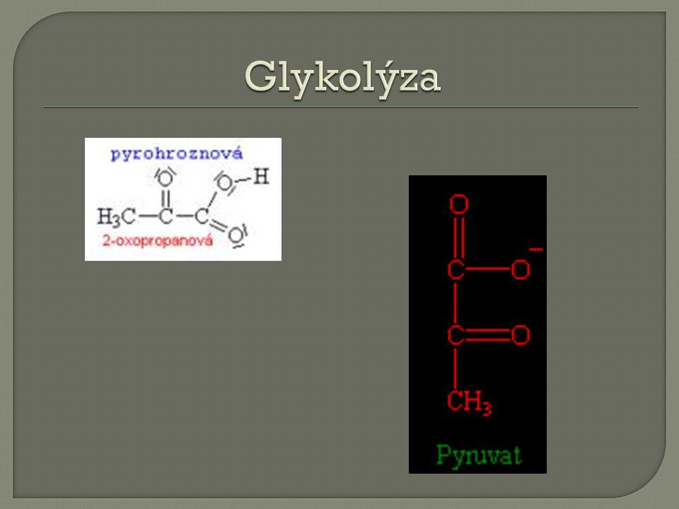  pyruvát je energeticky bohatá látka a) Alkoholové kvašení= fermentace -pyruvát ethanol -an aerobní d ě j b) Mlé č né kvašení - pyruvát kyselina mlé č ná - anaerobní d ě j c) Oxida č ní dekarboxylace - pyruvát acetylkoenzym A - aerobní d ě j - následuje Krebs ů v cyklus