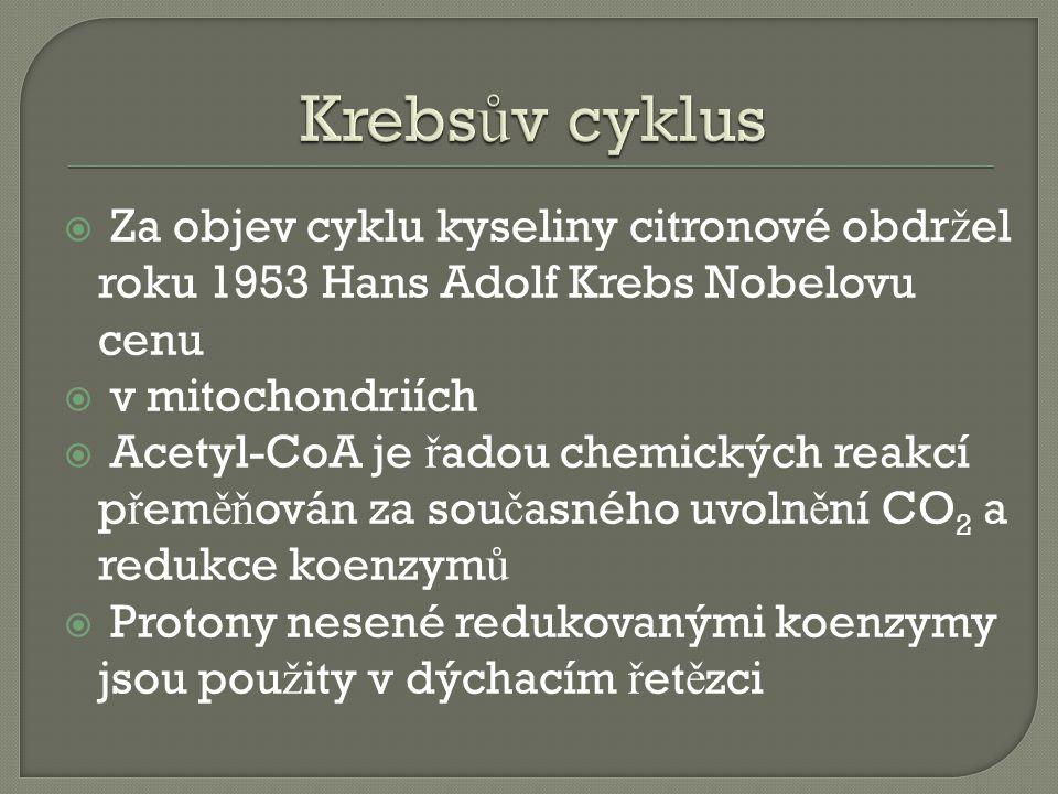  Za objev cyklu kyseliny citronové obdr ž el roku 1953 Hans Adolf Krebs Nobelovu cenu  v mitochondriích  Acetyl-CoA je ř adou chemických reakcí p ř em ěň ován za sou č asného uvoln ě ní CO 2 a redukce koenzym ů  Protony nesené redukovanými koenzymy jsou pou ž ity v dýchacím ř et ě zci