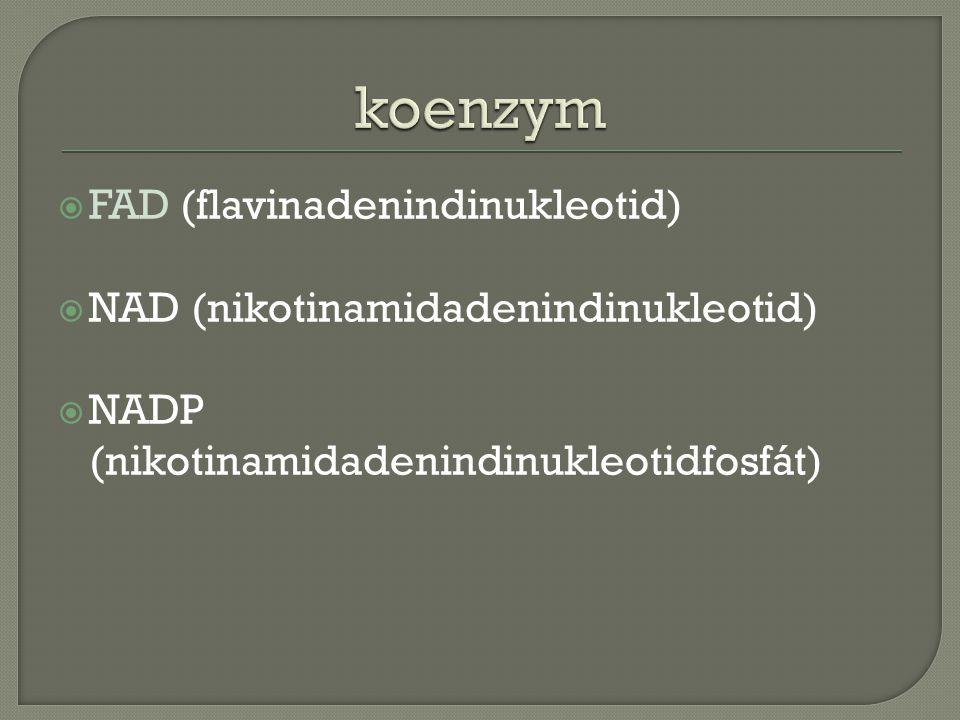  FAD (flavinadenindinukleotid)  NAD (nikotinamidadenindinukleotid)  NADP (nikotinamidadenindinukleotidfosfát)