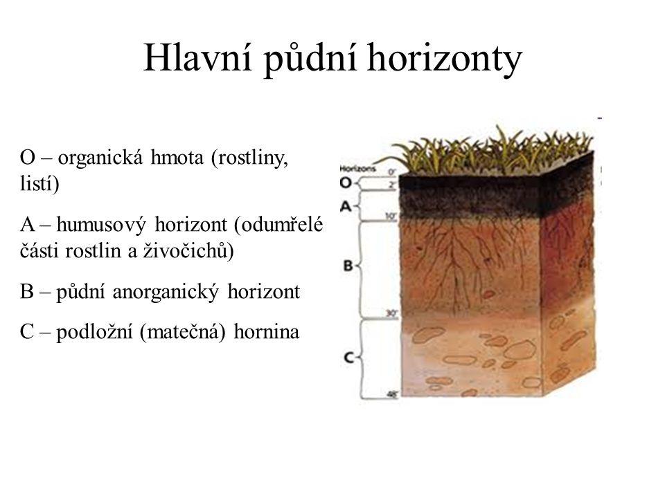 Hlavní půdní horizonty O – organická hmota (rostliny, listí) A – humusový horizont (odumřelé části rostlin a živočichů) B – půdní anorganický horizont C – podložní (matečná) hornina