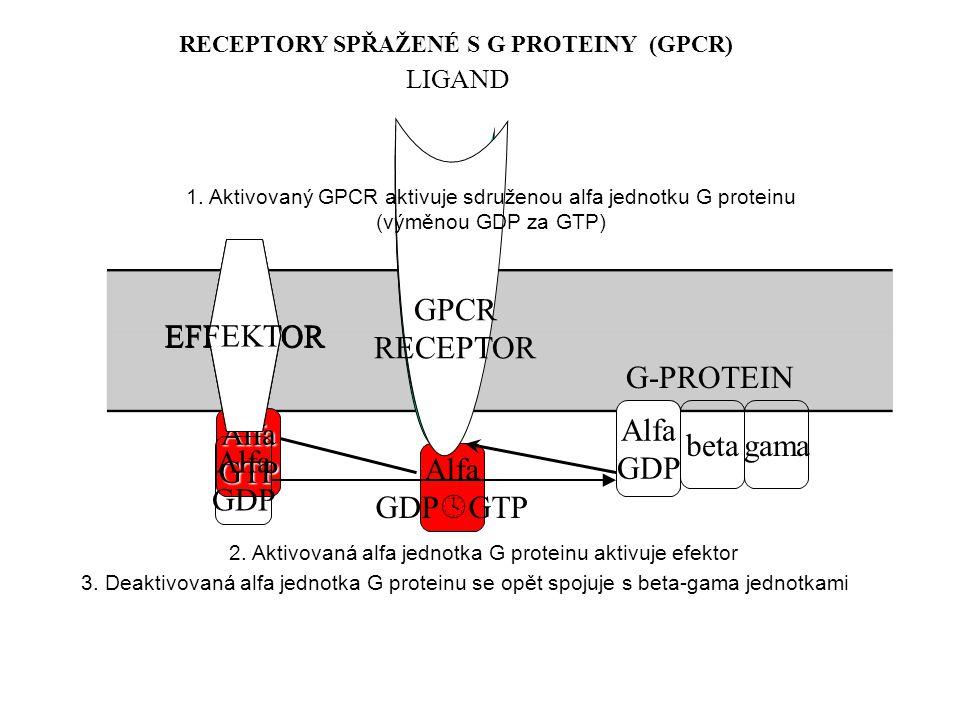 betagama EFFEKTOR Alfa GDP  GTP AlfaGTP Alfa GDP EFFEKTOR GPCR RECEPTOR G-PROTEIN Alfa GDP Alfa GDP EFFEKTOR RECEPTORY SPŘAŽENÉ S G PROTEINY (GPCR) LIGAND 1.